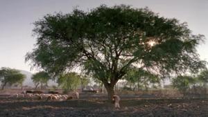 Fig. 8: Kæmpetræet.