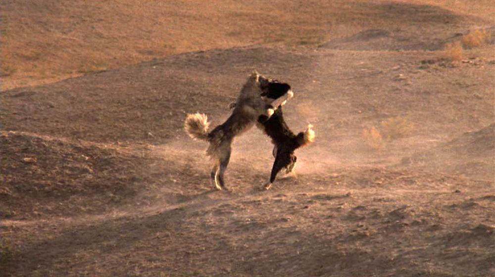 """Fig. 6: De gale hunde synes at være en reference til frasen """"Cry 'Havoc!', and let slip the dogs of war"""" fra William Shakespeares tragedie Julius Caesar (1599)."""