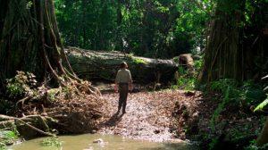Fig. 5. Da lastbilerne blokeres af et gigantisk træ, der er væltet midt i junglen, vælger en af forbryderne at bruge en mikroskopisk dosis af nitroglycerinen til at sprænge træstammen i stumper og stykker.