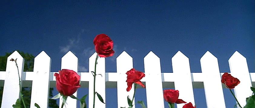 Fig. 10. I åbningssekvensen til Blue Velvet (1986) genbruger David Lynch Vintons nummer af samme navn og forstærker melodiens status som den utopiske lyd af amerikansk forstadspsykose.
